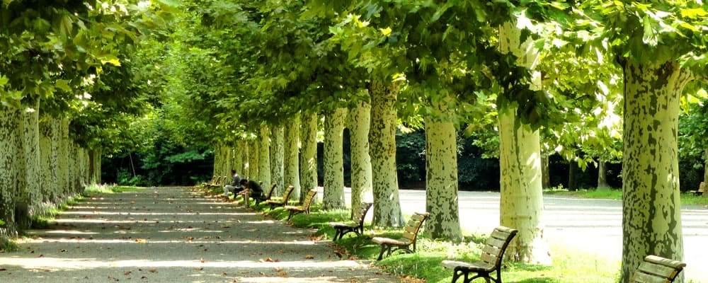 木漏れ日の美しい公園