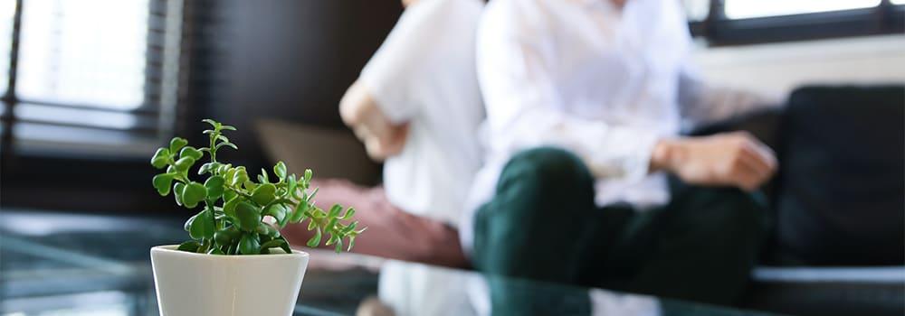 背を向けあう夫婦と観葉植物